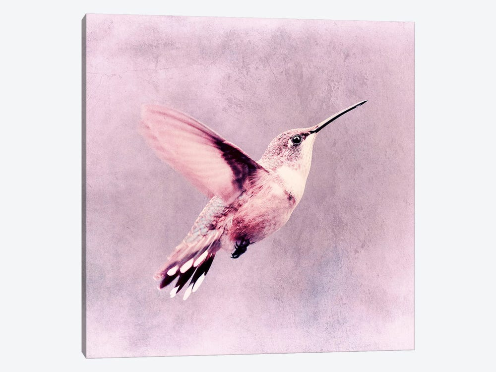 Kolibri by Claudia Drossert 1-piece Canvas Art