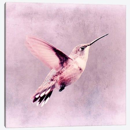 Kolibri Canvas Print #CDR149} by Claudia Drossert Canvas Artwork
