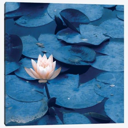 Lotus Canvas Print #CDR150} by Claudia Drossert Canvas Art Print