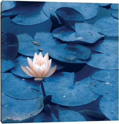Lotus Canvas Art Print
