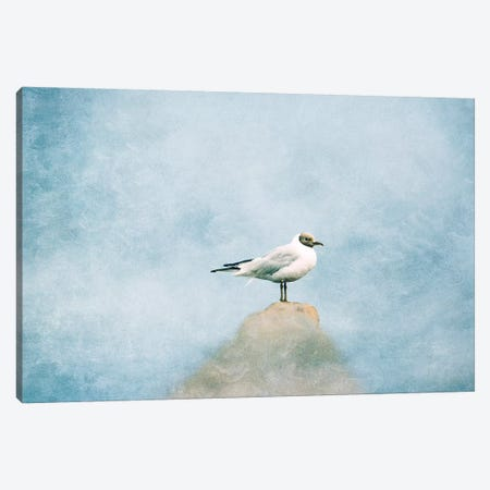 Seagull Canvas Print #CDR152} by Claudia Drossert Canvas Print