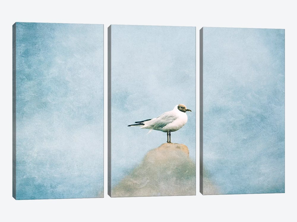 Seagull by Claudia Drossert 3-piece Canvas Artwork