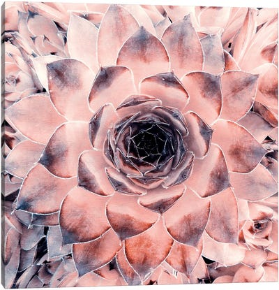 Succulenta Canvas Art Print