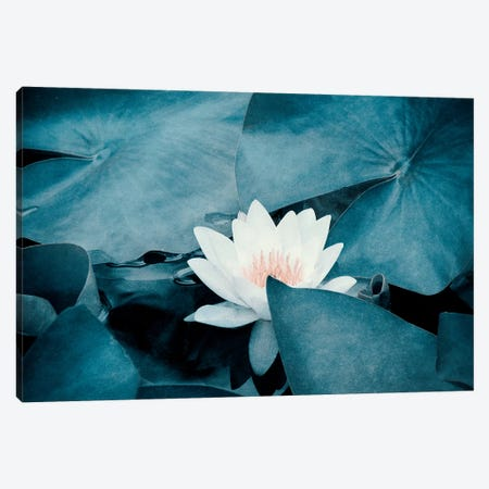 Water Lily Canvas Print #CDR154} by Claudia Drossert Canvas Wall Art