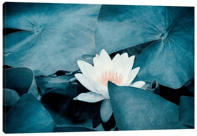 Water Lily Canvas Art Print