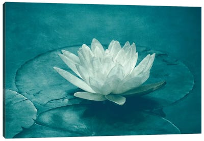 White Lotus Canvas Art Print