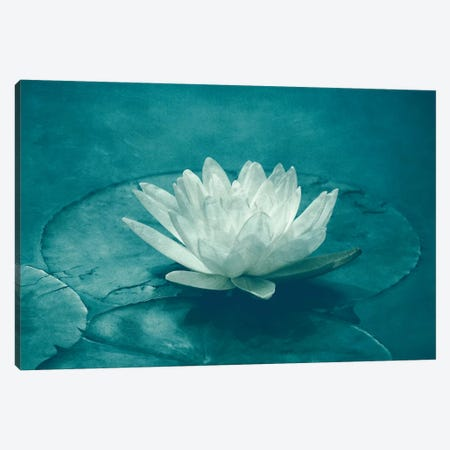 White Lotus Canvas Print #CDR155} by Claudia Drossert Canvas Art