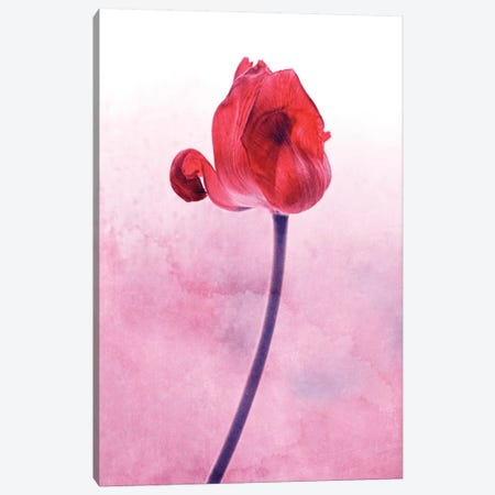 Red Tulip 3-Piece Canvas #CDR158} by Claudia Drossert Canvas Print