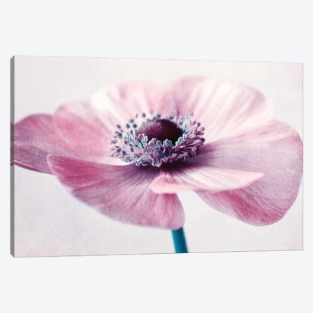 Flowerful Canvas Print #CDR159} by Claudia Drossert Canvas Print