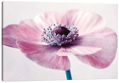 Flowerful Canvas Art Print