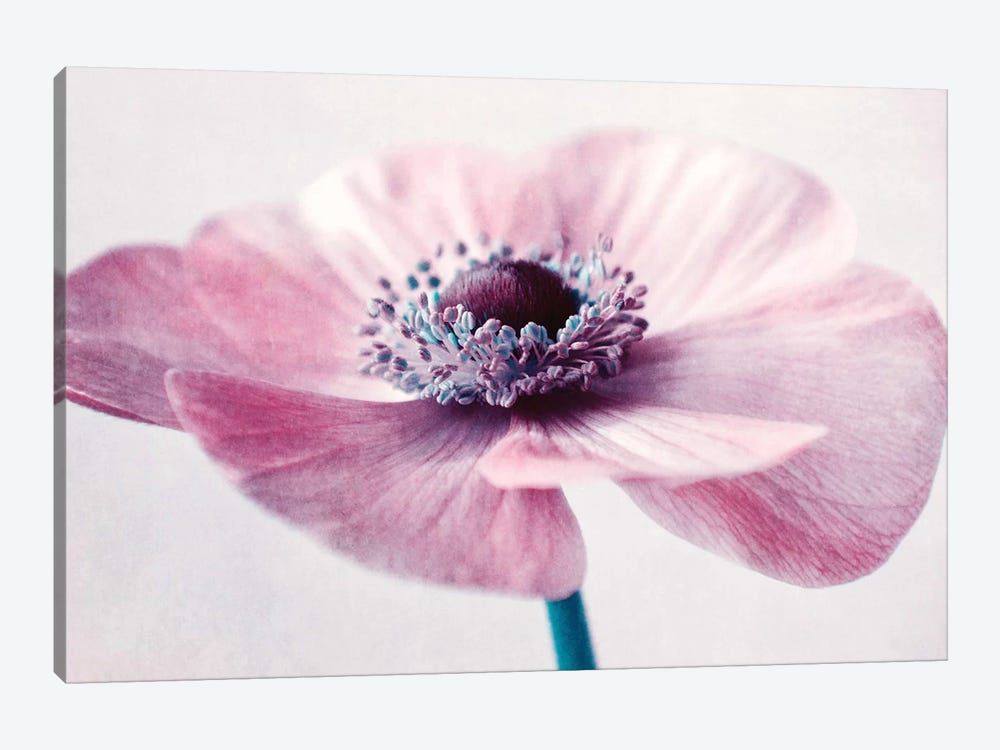 Flowerful by Claudia Drossert 1-piece Canvas Print