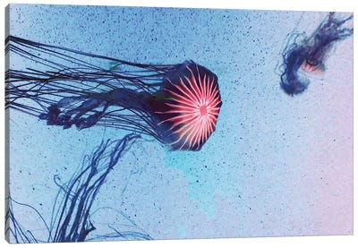 Jellyfish I Canvas Art Print