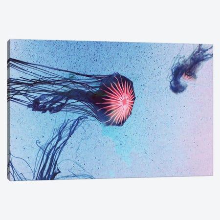 Jellyfish I Canvas Print #CDR165} by Claudia Drossert Art Print