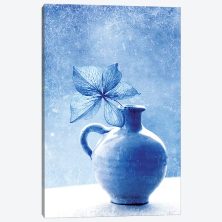 Blue Hydrangea Stilllife Canvas Print #CDR166} by Claudia Drossert Art Print