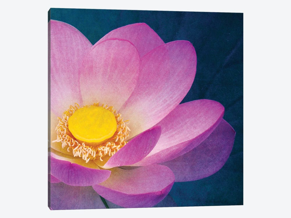 Pink Lotus by Claudia Drossert 1-piece Canvas Art
