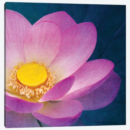 Pink Lotus Canvas Print #CDR167} by Claudia Drossert Canvas Print
