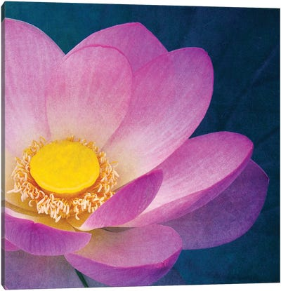 Pink Lotus Canvas Art Print