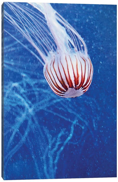 Jellyfish II Canvas Art Print