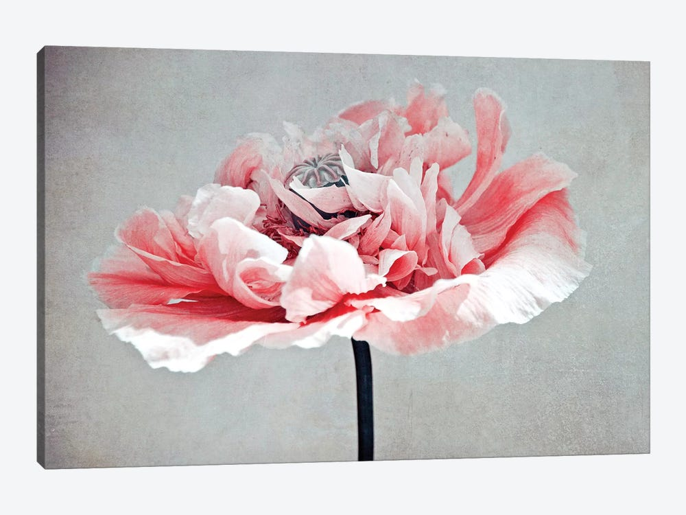 Coral Poppy by Claudia Drossert 1-piece Canvas Wall Art