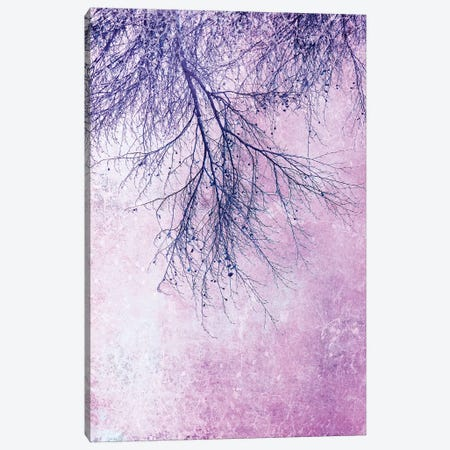 Branches Canvas Print #CDR171} by Claudia Drossert Canvas Print