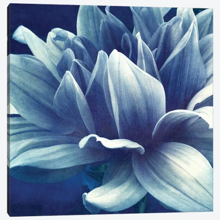 Blue Dahlia Canvas Print #CDR178} by Claudia Drossert Canvas Art Print