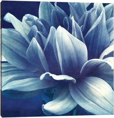 Blue Dahlia Canvas Art Print