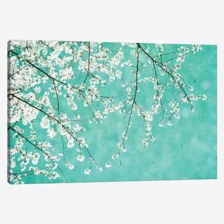Cherryblossoms Canvas Print #CDR186} by Claudia Drossert Art Print