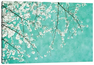 Cherryblossoms Canvas Art Print