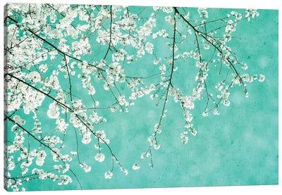 Cherryblossoms Canvas Art Print