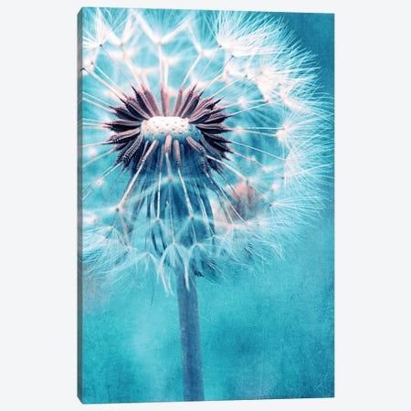 Dandelion Canvas Print #CDR187} by Claudia Drossert Canvas Art Print