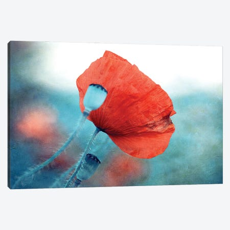 Red Poppy Canvas Print #CDR188} by Claudia Drossert Canvas Art