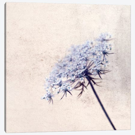 Florazul Canvas Print #CDR20} by Claudia Drossert Canvas Wall Art