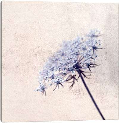 Florazul Canvas Print #CDR20