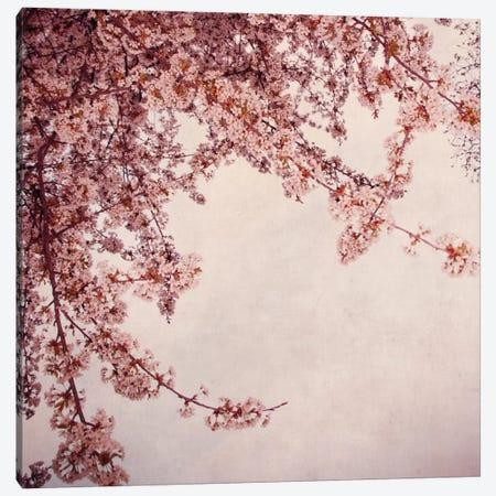 Fruhlingsbaum 3-Piece Canvas #CDR21} by Claudia Drossert Canvas Artwork