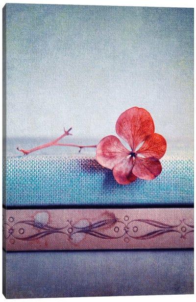 Hortensie Pink II Canvas Print #CDR26