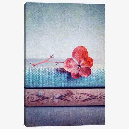 Hortensie Pink II Canvas Print #CDR26} by Claudia Drossert Art Print