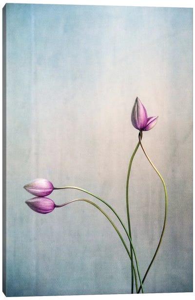 Liebe Canvas Art Print
