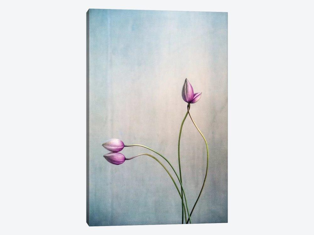 Liebe by Claudia Drossert 1-piece Canvas Print