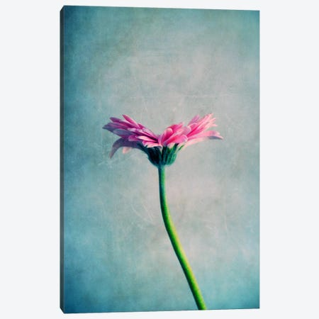 Magerite Canvas Print #CDR36} by Claudia Drossert Canvas Art