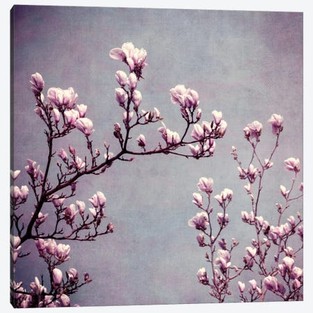 Magnolie II Canvas Print #CDR37} by Claudia Drossert Canvas Art