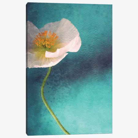 Mohn Bleu Canvas Print #CDR38} by Claudia Drossert Canvas Art Print