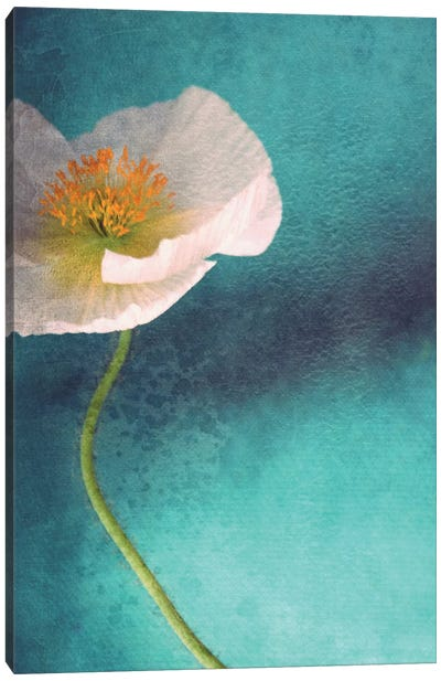 Mohn Bleu Canvas Art Print