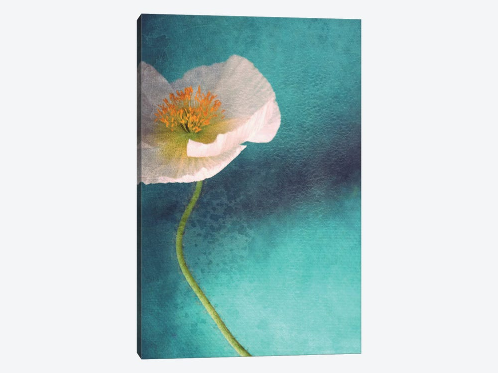 Mohn Bleu by Claudia Drossert 1-piece Canvas Art