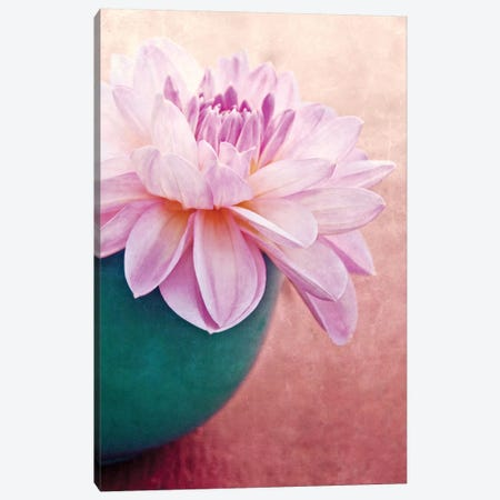 Beauty Canvas Print #CDR3} by Claudia Drossert Canvas Art