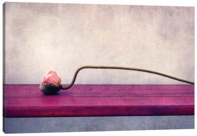 Poppy Still Life Canvas Print #CDR56