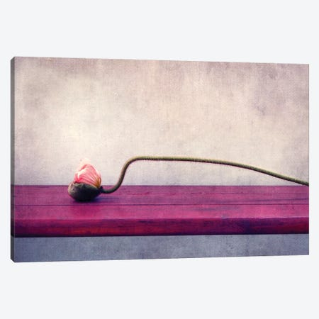 Poppy Still Life Canvas Print #CDR56} by Claudia Drossert Canvas Artwork