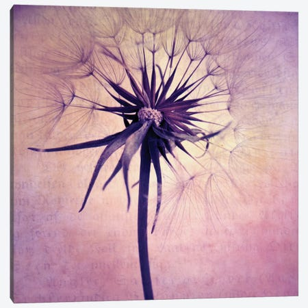 Puste Blume II Canvas Print #CDR57} by Claudia Drossert Canvas Art
