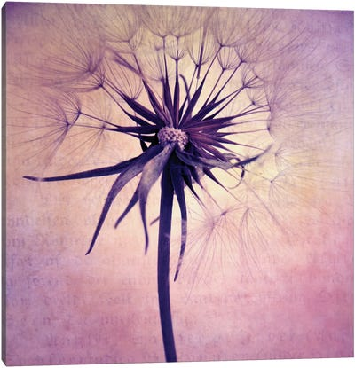 Puste Blume II Canvas Art Print
