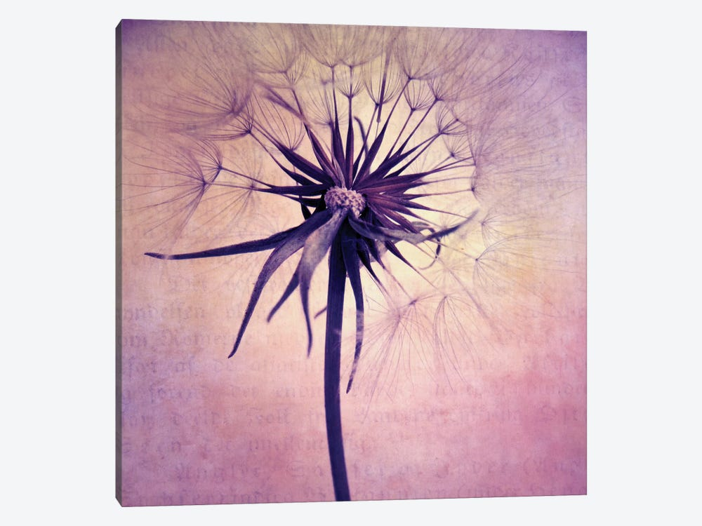 Puste Blume II by Claudia Drossert 1-piece Canvas Print