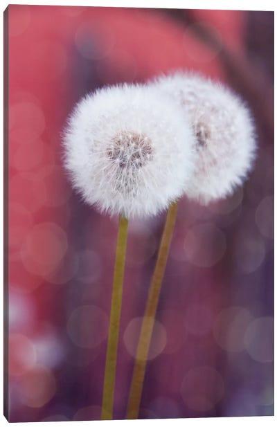 Puste Blume I Canvas Art Print